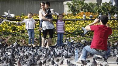Sacrificadas más de 900 palomas de la plaza de Catalunya de Barcelona
