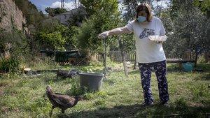 Esperança alimenta a las gallinas del Institut Escola Antaviana, en Roquetes.