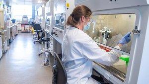 Cap de les mutacions detectades del coronavirus el fa més contagiós