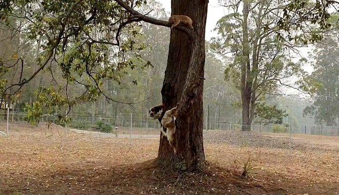 ¡Lluvia cae en Australia!; ¿la naturaleza podrá aplacar las llamas?