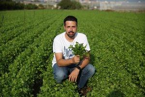 Agricultors del coriandre