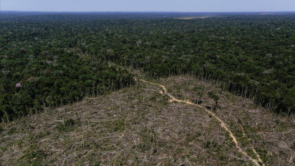 Un terreno deforestado en el estado brasileño de Amazonas.