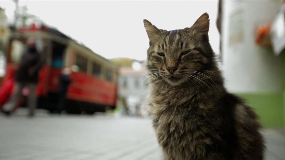 'Kedi': gatos que nos hacen personas