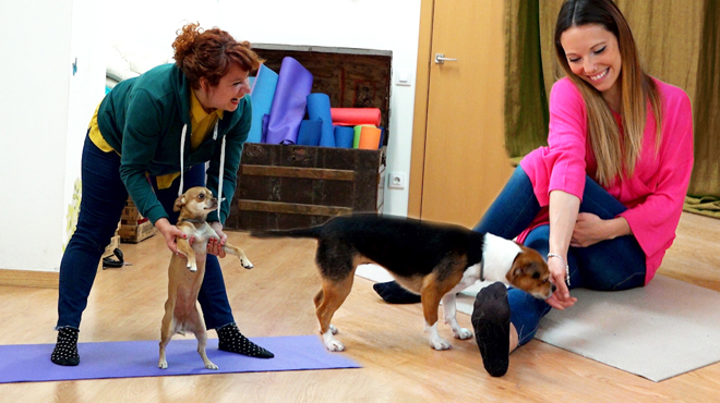 ¿Te gustan los perros y te mola el yoga?, entonces lo tuyo es el Doga.