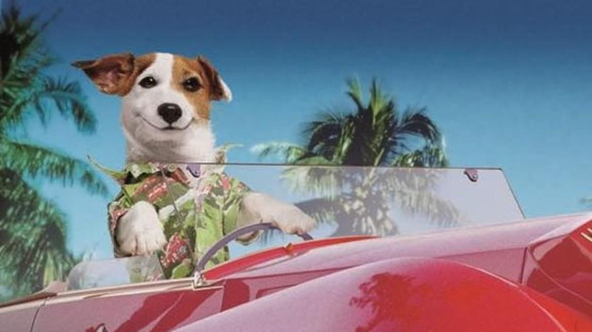 Muere Pancho, el perro millonario de la Primitiva, a los 16 años.