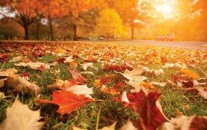 La caída de las hojas en el otoño.