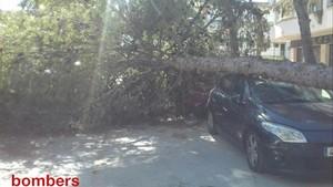 El viento supera 100 km/h, tumba árboles y complica la movilidad en Catalunya