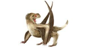 Reconstrucción de uno de los pterosaurios de cola corta estudiados