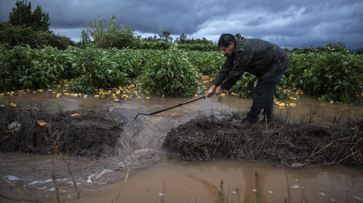 Un agricultor de Almenara (Castellón) afectado por la lluvia.