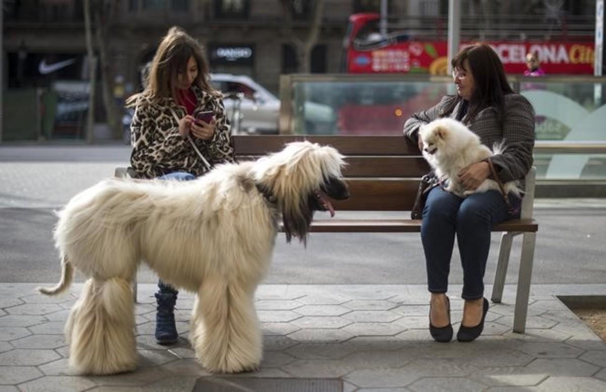 Dos mujeres con sus perros, en el paseo de Gràcia, el 20 de noviembre.