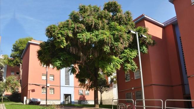 El árbol serpiente de la Via Favència