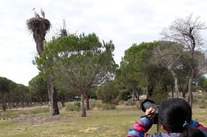 España espera el regreso paulatino de unas 130.000 cigüeñas