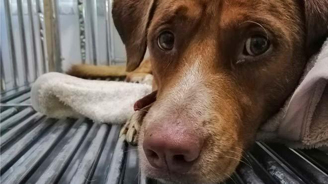 El gos rescatat a alta mar serà adoptat pel seu salvador
