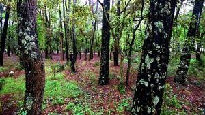 zentauroepp351150 bosques bosque170918174328