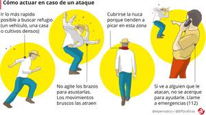 Los peculiares consejos de Galicia contra el ataque de la avispa asesina