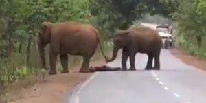 El emocionante funeral de una madre elefante tras la muerte de su cría