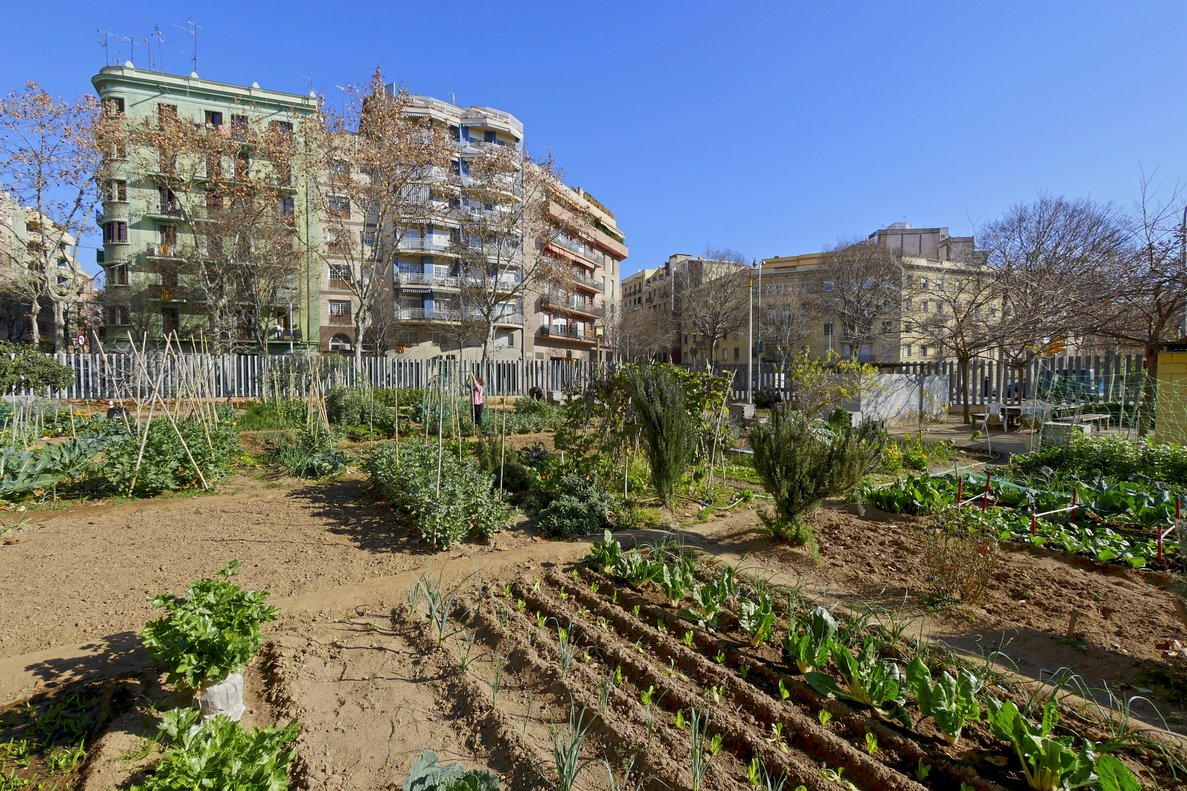 Ahorrar es uno de los atractivos que ofrecen los huertos urbanos.