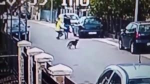 Un perro salva a una mujer de un atracador