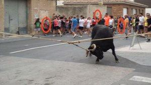 Menores señalados participando en los toros en Santa Bàrbara, en una imagen cedida por AnimaNaturalis