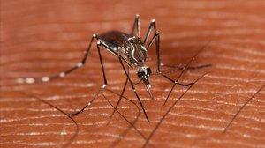 Tercera víctima mortal del virus del Nil a Sevilla