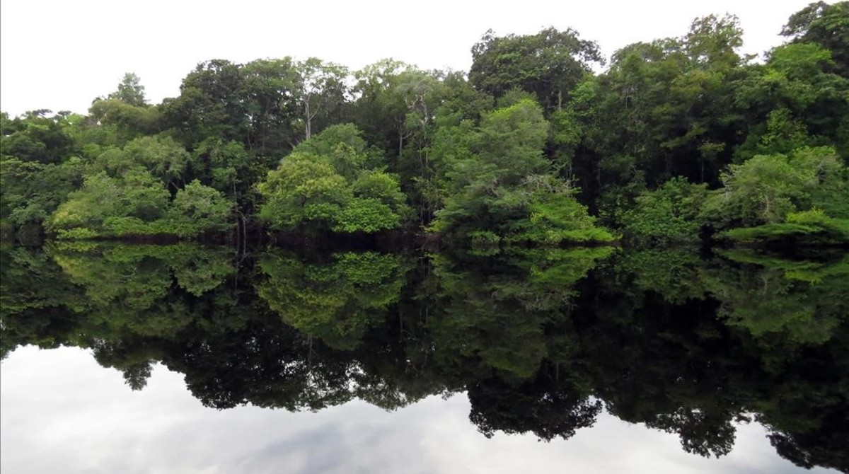 Vista aérea de un tupido paraje de la selva amazónica