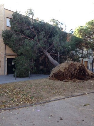 Un arbre caigut a la plaça de Marcet de Sabadell, aquest dimarts.