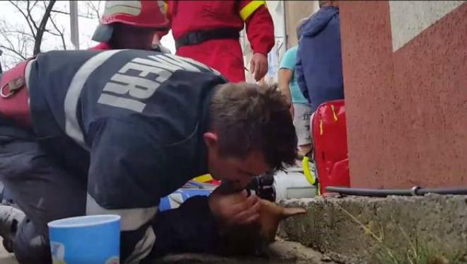 Momento en que un bombero rumano le hace el boca a boca a un perro intoxicado por el humo de un incendio.