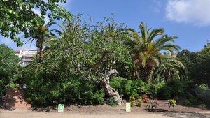 Jardines del parque del Guinardó.