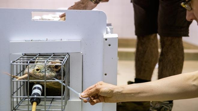 Especialistas del zoo de Barcelona en el tratamiento de los dragones de Komodo comparten sus conocimientos conveterinarios de otros zoos europeos.