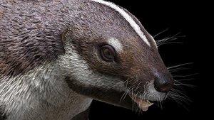 Primer plano de la reconstrucción de Bestia loca,un extraño mamífero de 66 millones de años