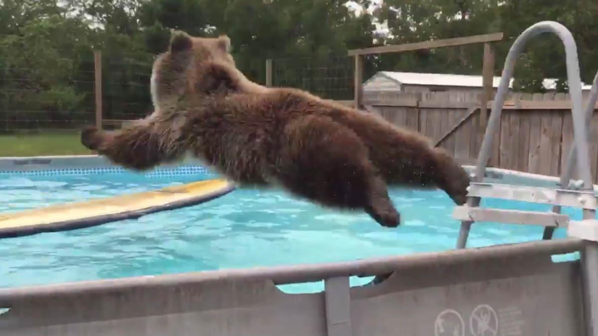 Bruiser, en el momento de tirarse a la piscina.