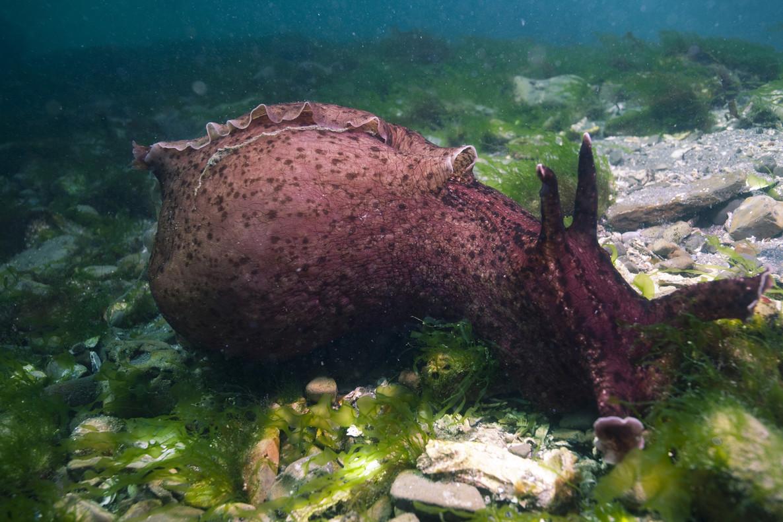 Un caracol marino
