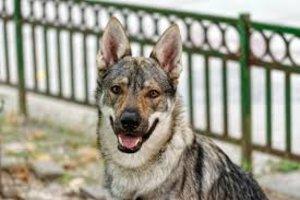 Un menor ferit greu per l'atac d'un gos a Navarra