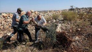 Tres palestinos intentan plantar de nuevo un olivo arrancado por un bulldozer israelí en Cisjordania, cerca del asentamiento de Ariel.