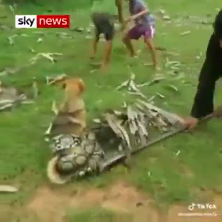 Unos niños liberan a un perro atrapado por una serpiente.