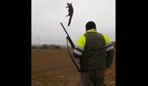 Confirmat l'arxivament del cas contra el caçador que va torturar una guineu