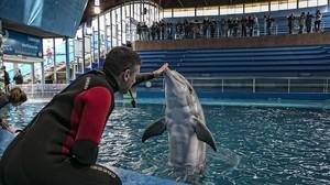 Instalación de delfines en el zoo de Barcelona.