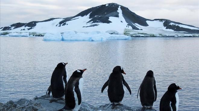 El gel de l'Antàrtida cau al segon mínim històric en 40 anys