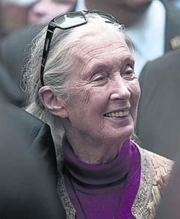 La activista Jane Goodall.