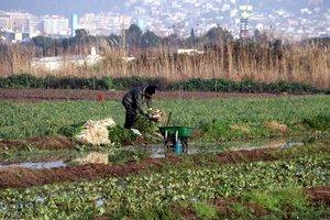 Agricultor de Gavà tras el paso del temporal 'Gloria'.