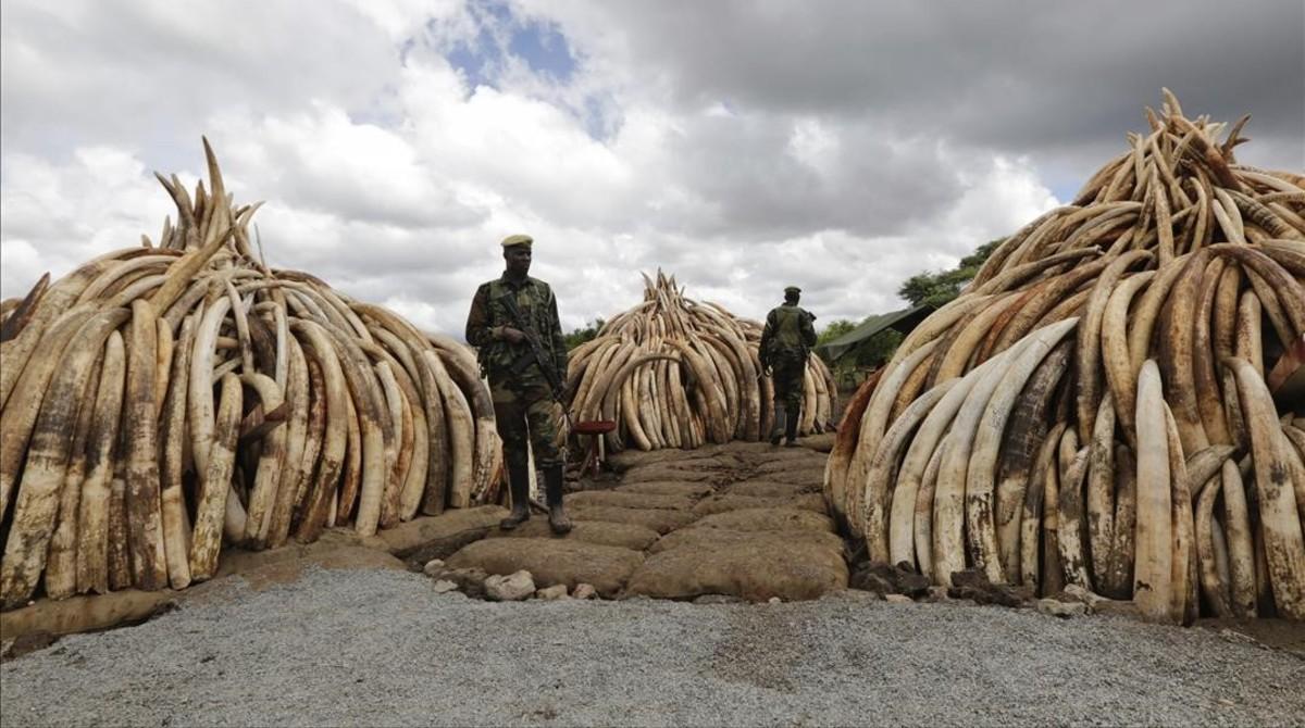 Incautaciones de marfil en el Parque Nacional de Nairobi, el pasado mes de abril.