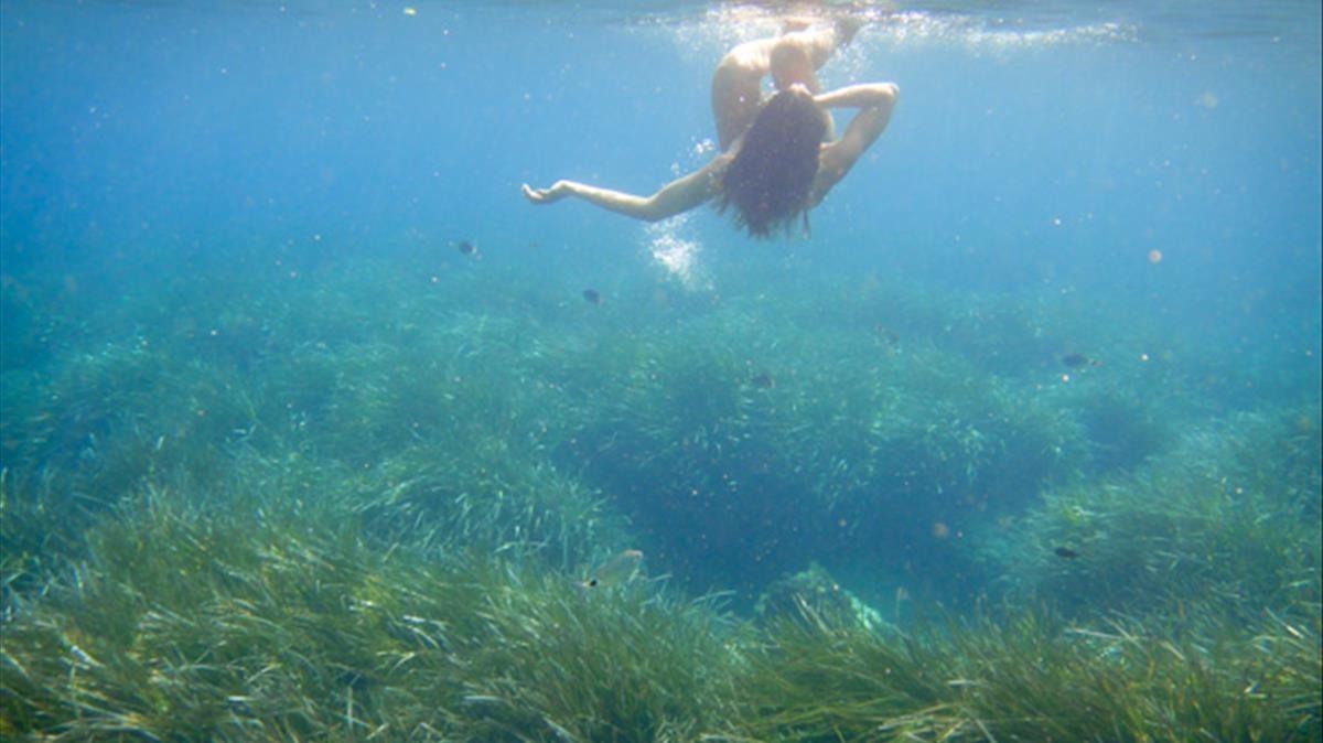 Una bañista buceando en un bosque de posidoneas en Eivissa.