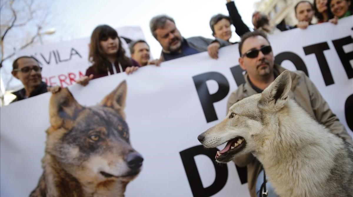 La manifestación en defensa del lobo, en Madrid.