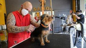 Peluquería canina 'Samoa', atendiendo a un cliente.