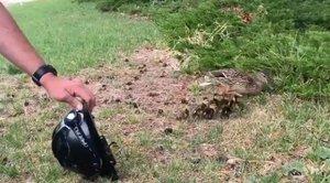 Un grupo de bomberos rescata a unos patos con una técnica revolucionaria: un vídeo de YouTube