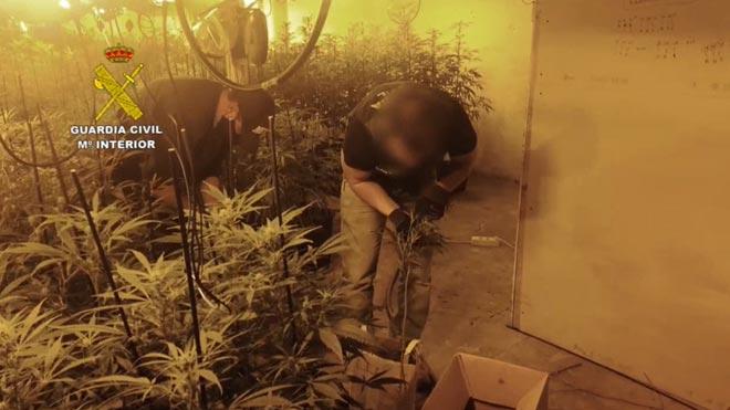 La Guardia Civil desarticula una banda que cultivaba marihuana en Granollers (Barcelona).