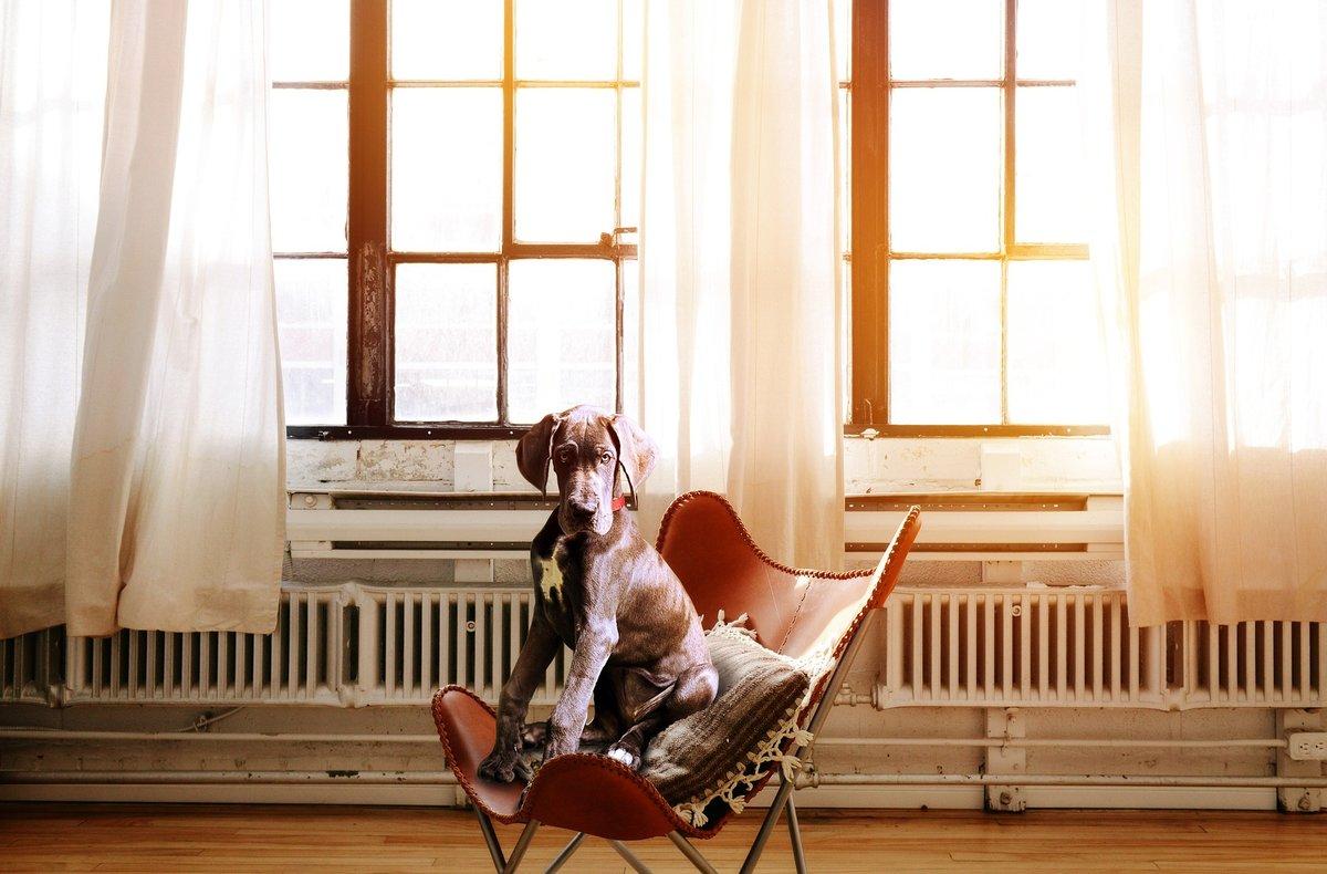 Hay personas que cambian alojamiento por el cuidado de sus mascotas