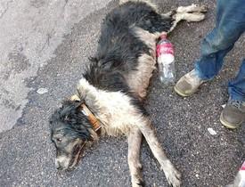 El perro fallecido en Fuenlabrada.