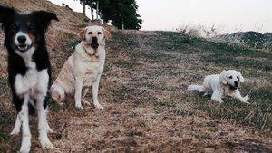 Tres perros disfrutan de la naturaleza.