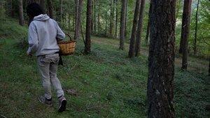 Localitzat el cadàver d'un boletaire de 65 anys a Viladrau